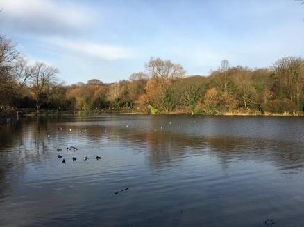 The ponds of Hampstead Heath